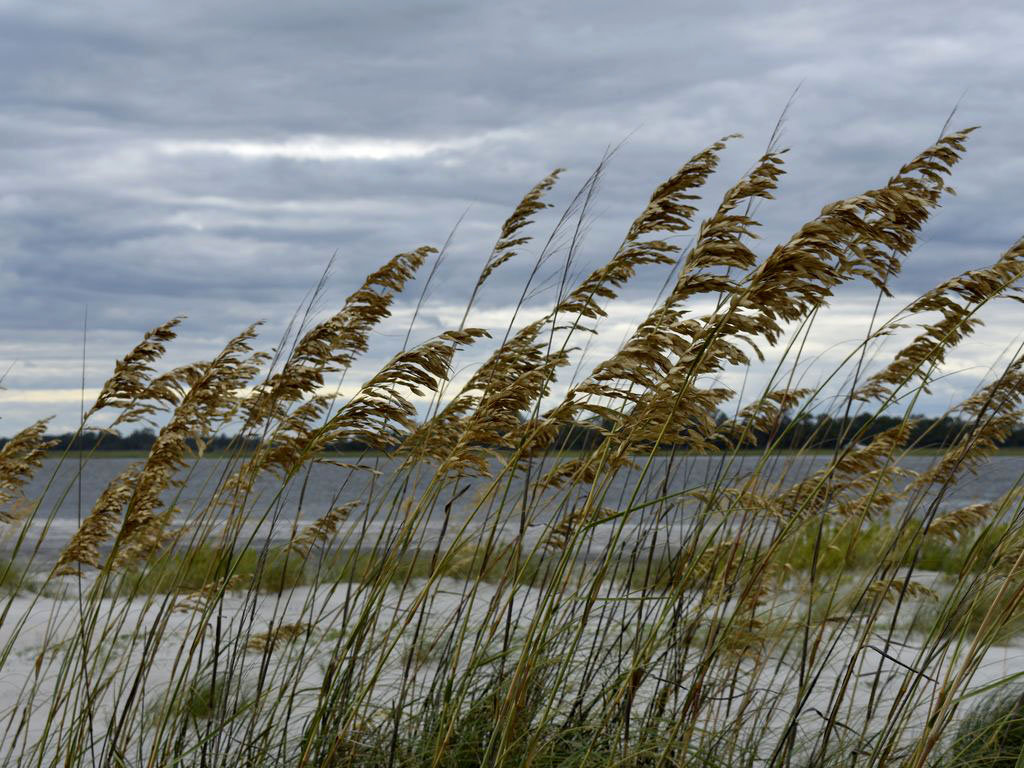 Sea oats and beach.