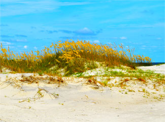 Dunes on Tybee Island